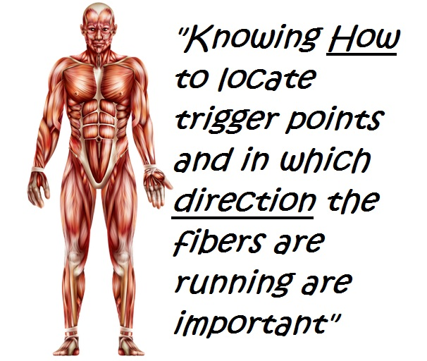 Trigger Point Therapy Muscle Locations