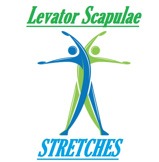 How To Stretch The Levator Scapulae Muscles